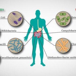 importancia_microbiota