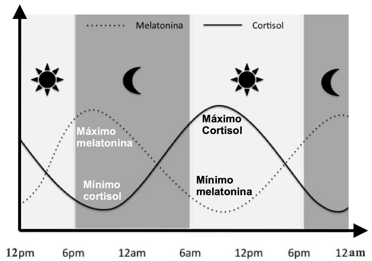 ciclos melatonina y cortisol