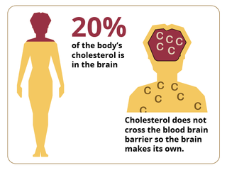 colesterol_cerebro