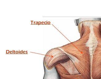 musculo-deltoides-y-trapecio