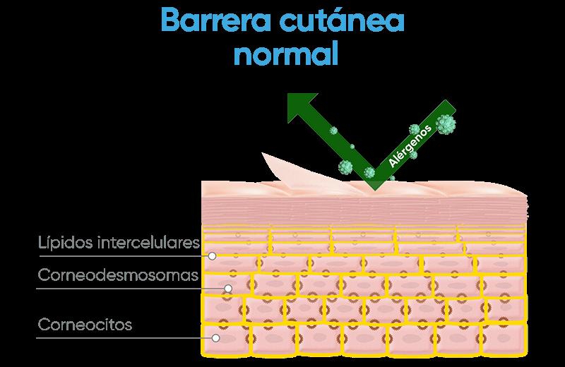 barrera-cutanea