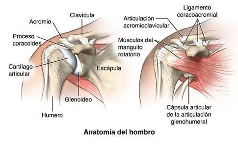 estructura-hombro